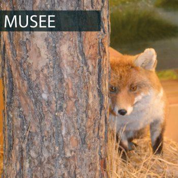 Menu Musee-01