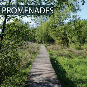 Menu_PROMENADES-01